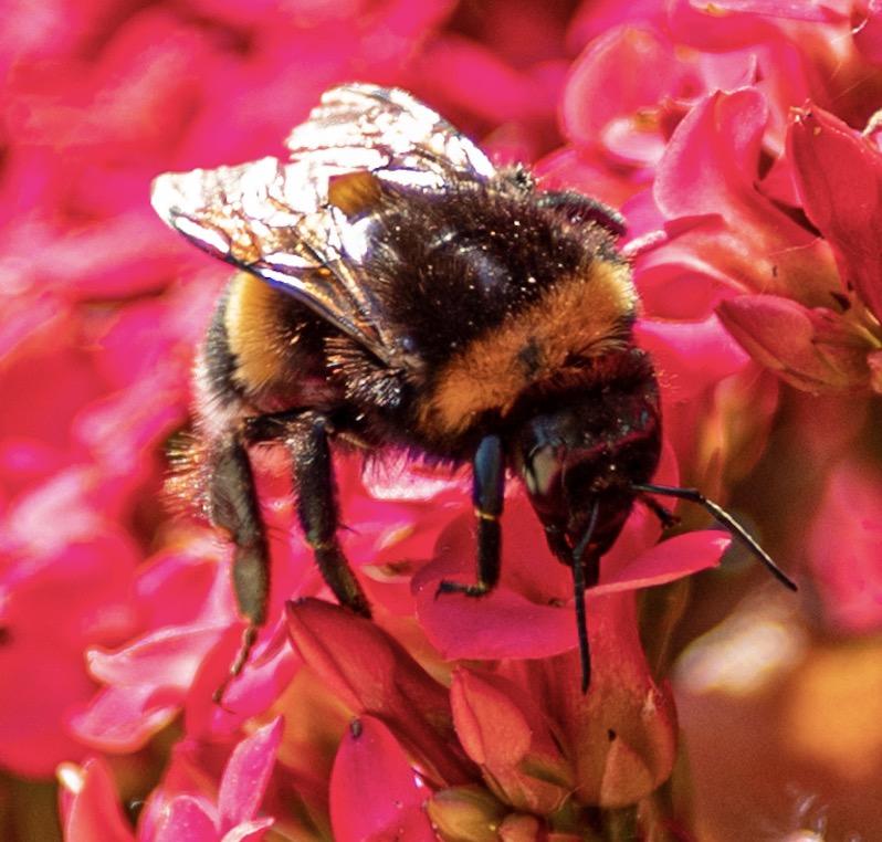 Fotowedstrijd Bijenlandschap