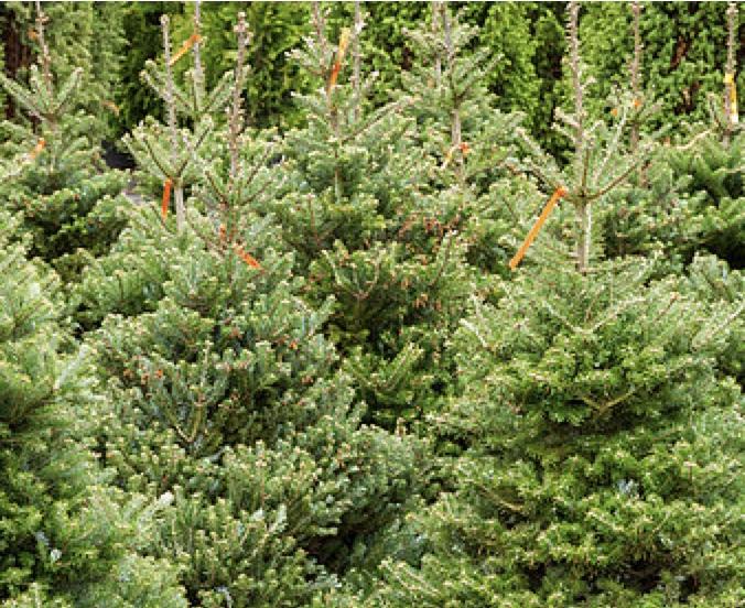 Prijswinnaars kerstboom challenge