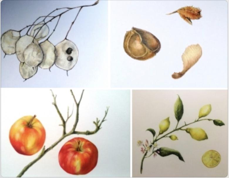 Cursus Botanisch tekenen in de Bollenstreek: bibliotheekbollenstreek.nl