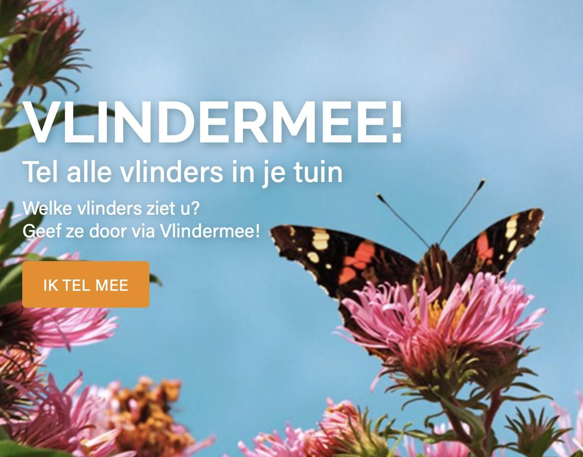Tuinvlindertelling tot en met 25 juli: vlinderstichting.nl